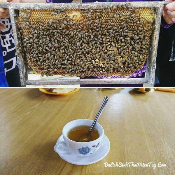 Trực tiếp nếm mật ong nguyên chất và tự tay pha cho mình một ly trà phấn hoa mật ong là 1 trải nghiệm thú vị của tour du lịch miền Tây giá rẻ