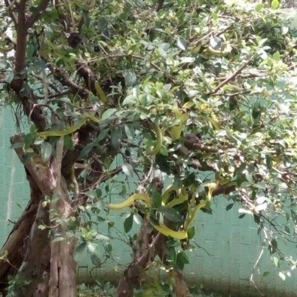 Trại rắn Đồng Tâm Tiền Giang nơi rắn được nuôi thả trong môi trường tự nhiên
