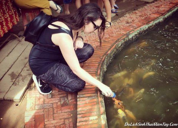 Khu du lịch cồn Phụng - Trò chơi cho cá bú bình