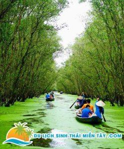 Tham quan rừng tràm trừ sư trên thuyền